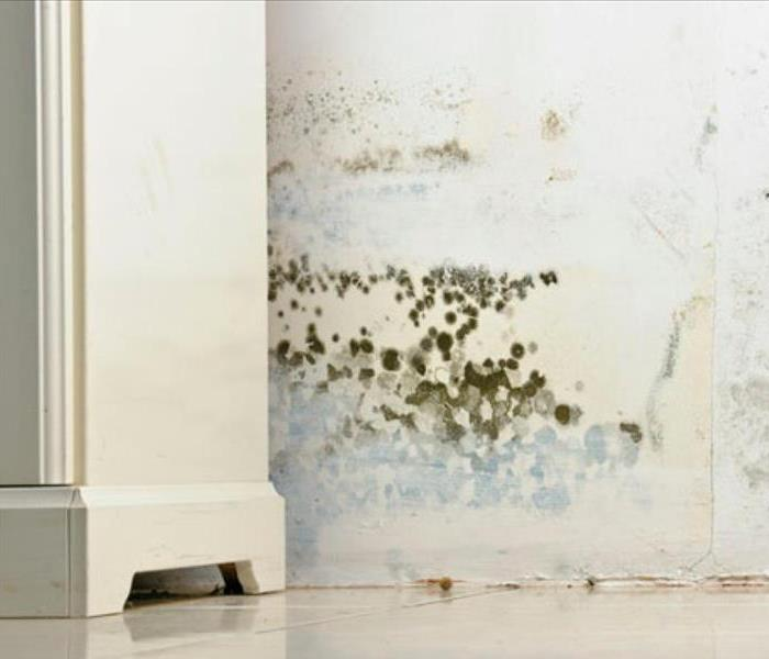 Mold Remediation Mold in Your Burbank Home