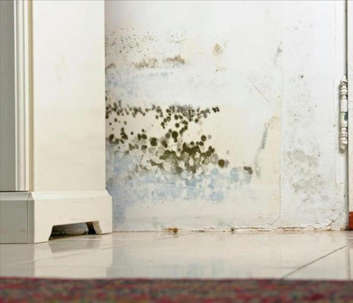 Mold Remediation Detecting Mold in Your Home